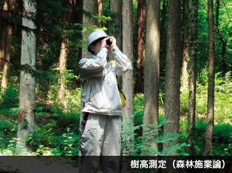 樹高測定(森林施業論)
